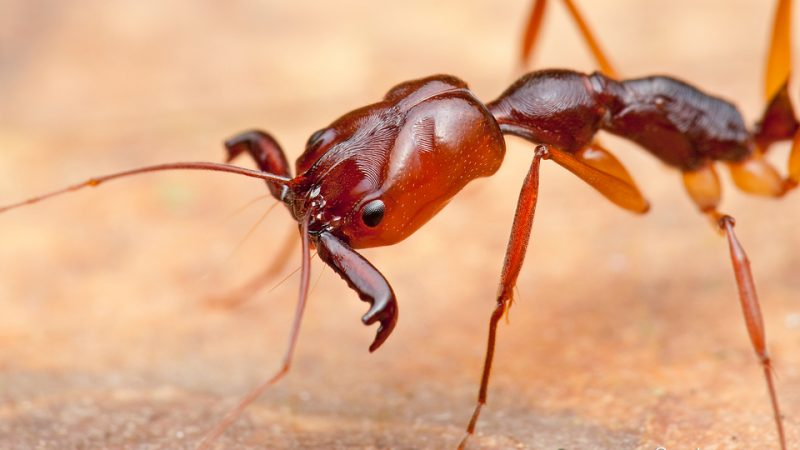 Fire Ants; Movin' On Up?!