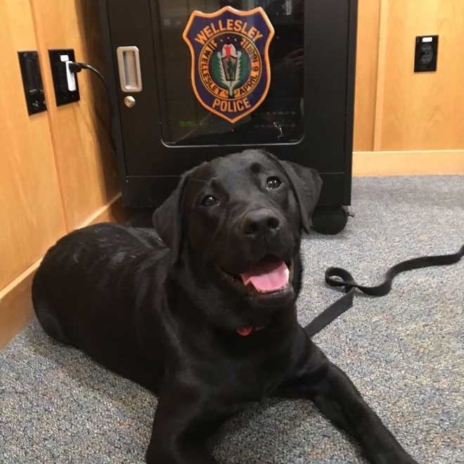 ember, puppy rescued by wellesley police