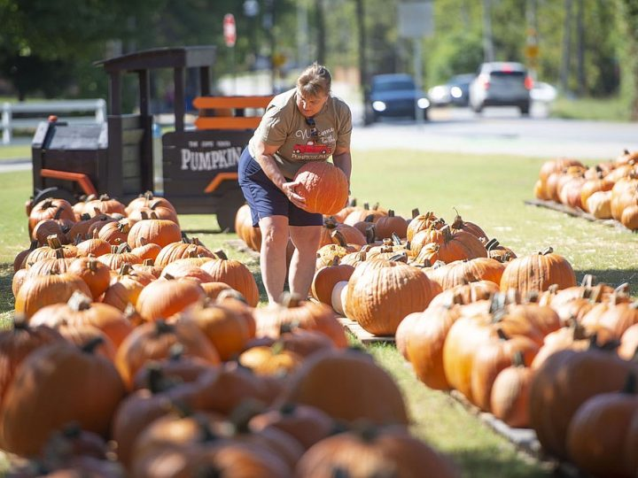 It's Fall, Y'All! Find NWA's best pumpkins, mazes, more